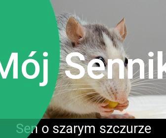 sen o szczurach znaczenie